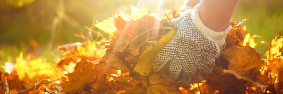 Fall Leaf Clean-Up